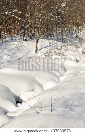 Small animal tracks running beside a snow covered stream during winter
