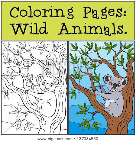 Coloring Pages: Wild Animals. Little Cute Koala Sits On The Tree And Holds Leathes In The Paw.