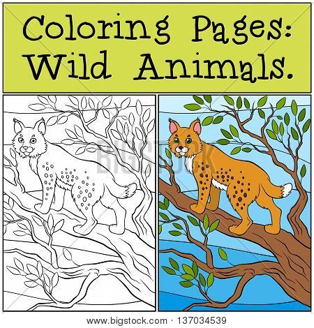 Coloring Pages: Wild Animals. Little Cute Lynx Stands On The Tree Branch And Smiles.