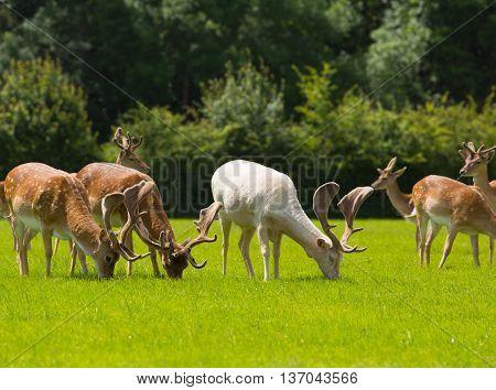 The New Forest Lyndhurst England uk wild deer