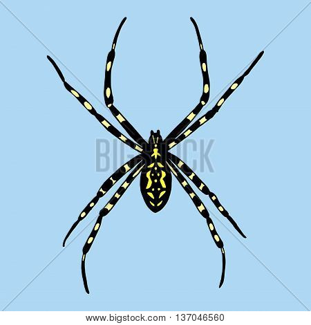 Vector illustration of spider. Argiope bruennichi on blue background