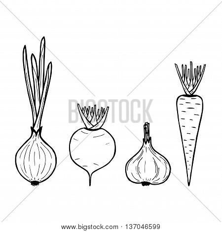 illustration of vegetables on white background. Vector carrot onion garlic beet