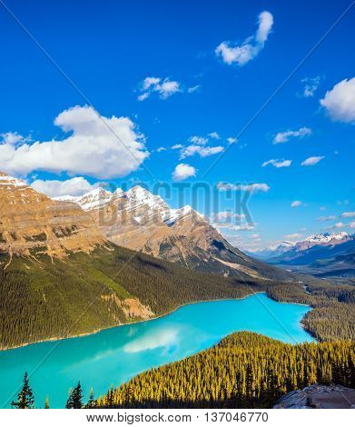 Turquoise water and bizarre form shores give the lake popular with tourists. Picturesque Lake Peyto in Banff National Park