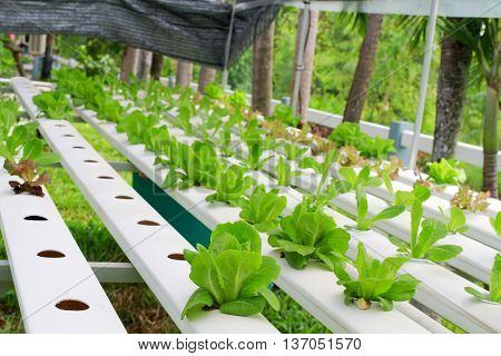 Step Set-grown Hydroponic And How To Grow Carefully.