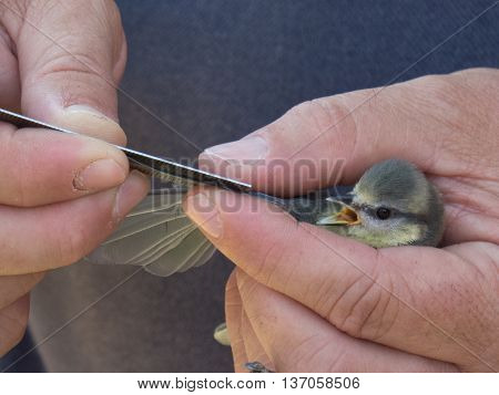 Little bird being held in Zaragoza Spain