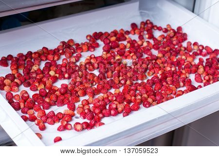 frozen strawberries in the freezer, a lot of