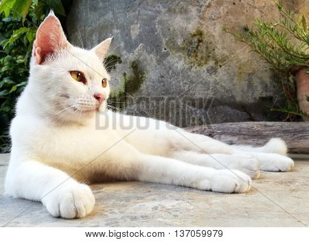 white cat lay down in front of cement background