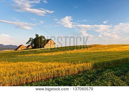 Traditional barns in Turiec region, northern Slovakia.