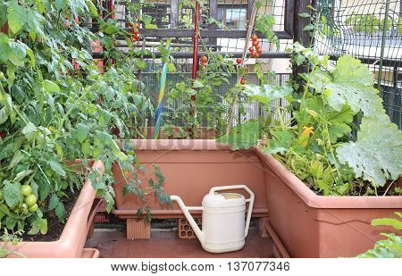 Watering Can And  Pots With Plants Of Red Tomatoes In A Urban Ga