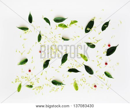 Pattern With Petals Of Chrysanthemum Flowers.