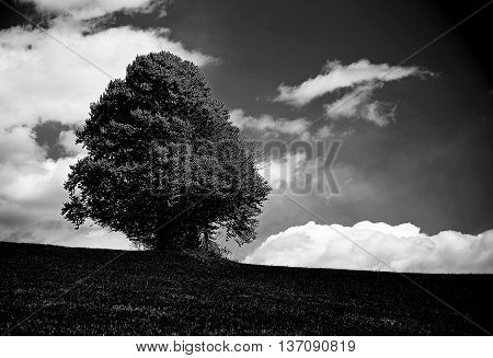 Very Dark Bleak Landscape With Isolated Tree In The Middle Of Th