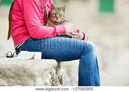Tabby Cat Lying On Lap Of Woman Sitting In Garden On Stone Wall. Majorca. Balearic Island. Spain.