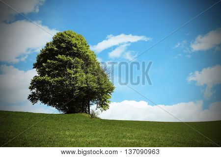 Tree In The Middle Of The Green Meadow In Summer