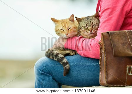 Two Cats Lying On Lap Of Woman Sitting In Garden On Stone Wall. Majorca. Balearic Island. Spain.