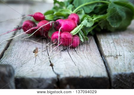Fresh organic radish on a old wooden background. radishes with tops
