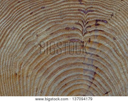 sawn wood with a unique natural pictures, visible tree rings