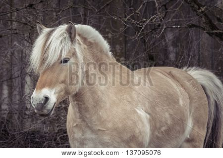 Portrait of a wild horse side profile.