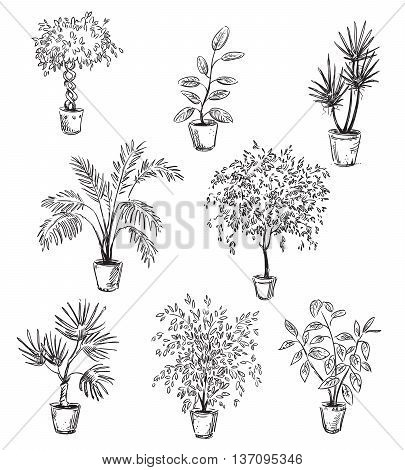 Set of home flowers in pots vector drawing fully editable
