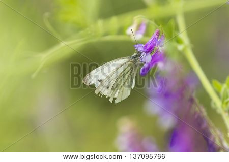 Butterfly On Flower. Butterfly In Nature. Yellow Butterfly In Flowers Garden. Butterfly Pollinating