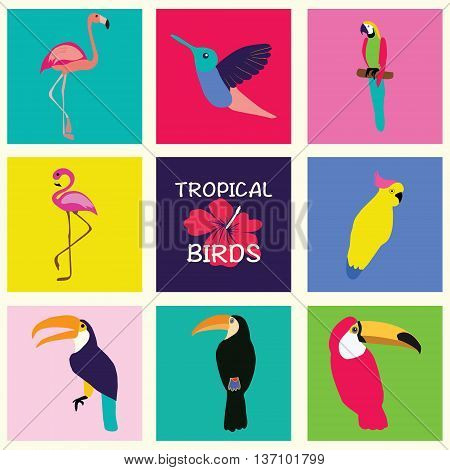 Vector hand drawn Tropical Set of birds. Bright exotic tropical birds. Parrot Cockatoo flamingo toucan hummingbird. Vector collection.