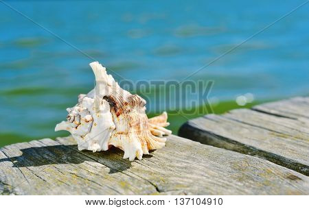 closeup of a conch on a weathered wooden pier over the sea