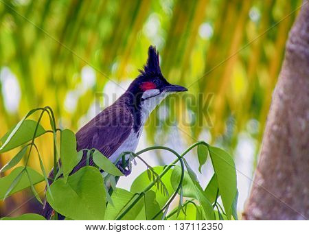 Scatto di un uccellino tipico dell'isola di Mauritius