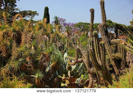 a garden of tropical plants, different varieties of cacti, from small to tall, with a long barrel, Yucca, and other plants