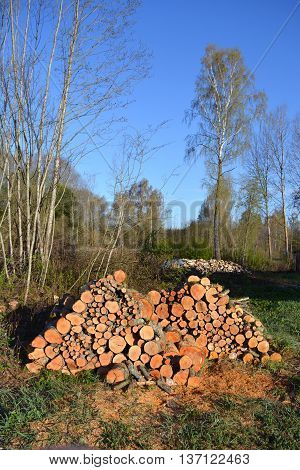 alder firewood log stack in early spring near forest