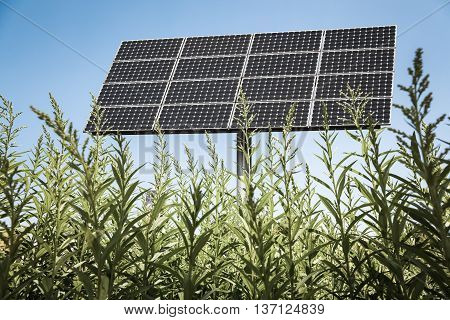 solar panels in the green clean energy background