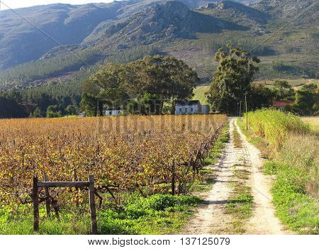 Grape Farm, Franchhoek, Western Cape South Africa
