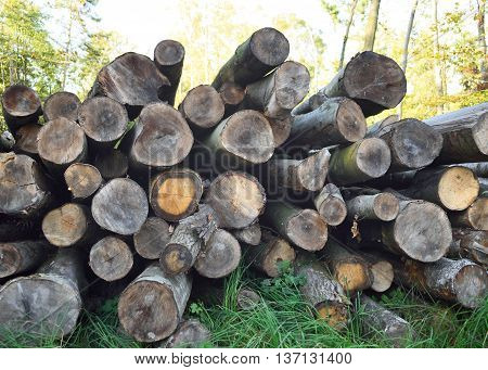 pile of wood, stack of tree trunks in an autumn forest