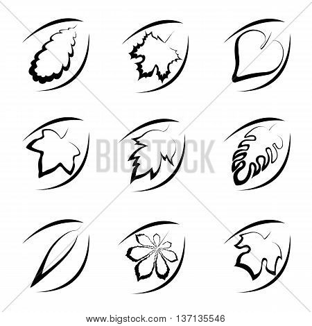 Simplified set of leaves from different trees in the form of icons