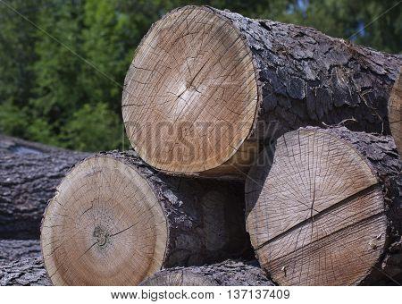 Cut trees waiting for milling at lumber yard