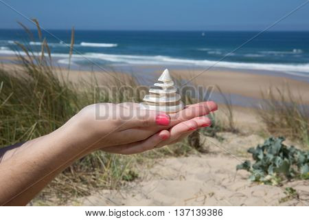 Attractive Brunette Woman On Beach With A Cockleshell In Hands
