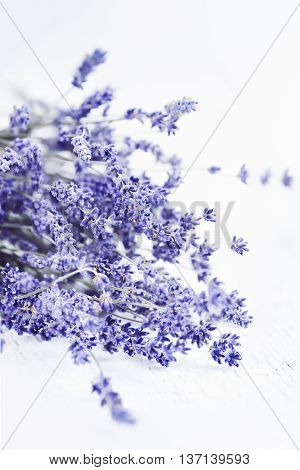 Abstract view of a bundle of dried lavender flowers with an extreme shallow depth of field.