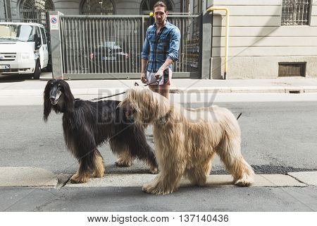 MILAN ITALY - JULY 7: Unidentified man walks with two beautiful Afgan Hounds on JULY 7 2016 in Milan.