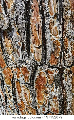 The bark on an old tree carved with age.