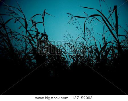 Grass at sunset nature season summer wind grass plant evening air silence clouds sky blue