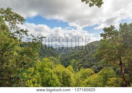 Martinique Carribean. The beautiful garden of Balata