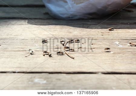 A group of Flies eating leftovers on the table