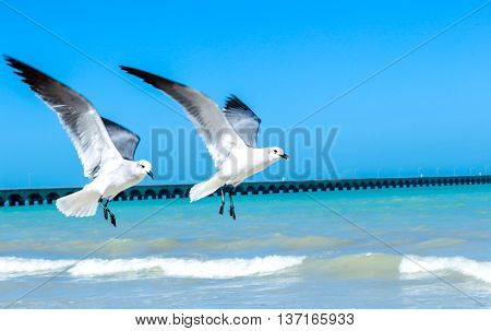 imagge for flying seagulls over a Yucatan peninsula beach