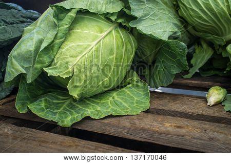 Fresh head organic green cabbage at local farmers market