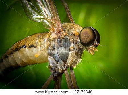 Macro close up horse fly in flight frozen action