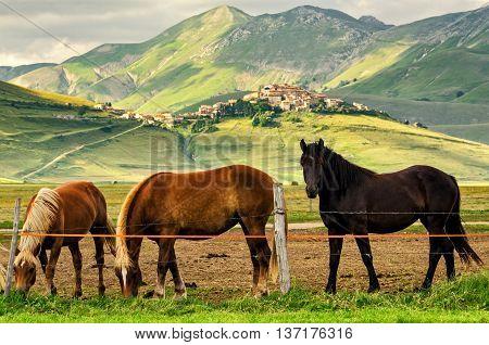 Castelluccio di Norcia (Umbria Italy) and horses