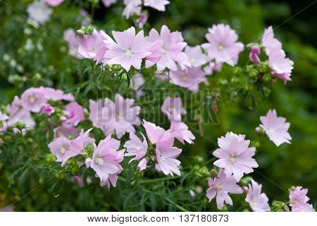Pink flowers in the wild