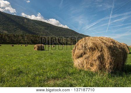 sky nature field hay farm summer blue golden