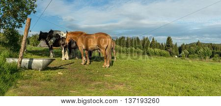 A group of horses in a meadow in the Sumava panoramic view of the countryside at Pilipova Hut South Bohemia