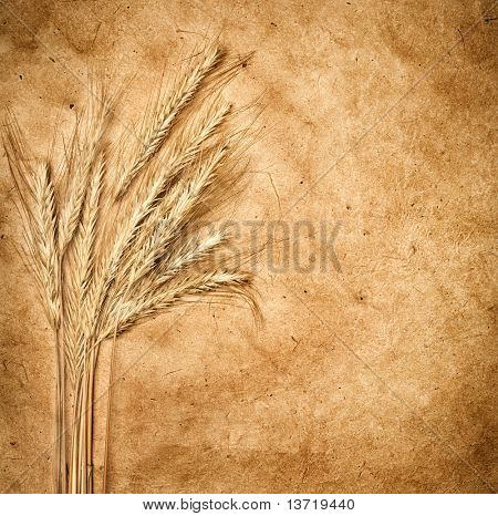 Wheat ears on vintage background