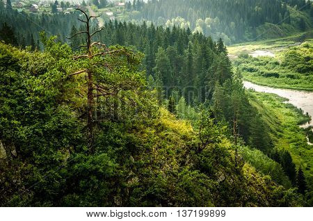 thick morning fog in the summer forest. thick fog covered with thick coniferous forest. forest with a bird's eye view . coniferous trees thickets of green forest