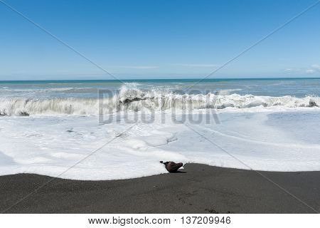 Waves crash onto South Pacific beach in New Zealand leading white foam wash as they flow back.